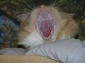 Почему человек зевает?