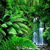 Почему растения выбрали зелёный цвет?