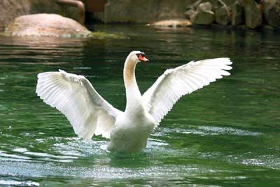 Лебеди своими руками из бетона 4