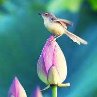 Как птицы стали сладкоежками?