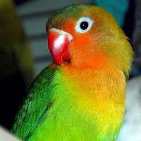 Как понять попугая: птичьи жесты