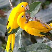 Как понять попугая: словарь звуков
